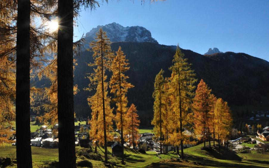 Larch trees in autumn San Candido